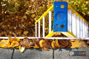 Fall Leaves and Ladder